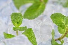Świeży nowych liści kłamstwo na kostka lodu przygotowanie koktajle Pojęcie świeżość i czystość zdjęcia stock