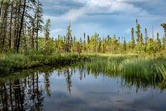 Świerkowy reflexion w Les grands parki narodowi, Quebec zdjęcia stock