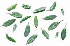 Świezi aksamitni liście ogrodowa mędrzec na białym tle fotografia stock