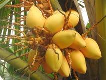 ŚWIEZI owoc i warzywo W NUWARA ELIYA, SRI LANKA fotografia stock