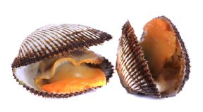 Świezi shellfish obrazy stock
