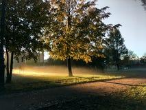 Świt w jesień parku obrazy royalty free