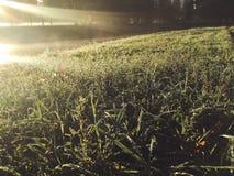 Świt w jesień parku obrazy stock