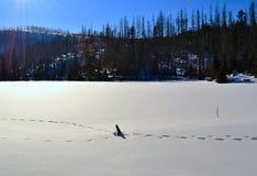 Åumava山在冬天-结冰的湖 免版税库存照片
