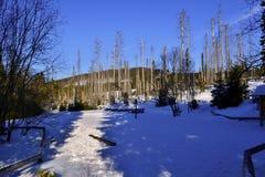 Åumava山在冬天-太阳照亮的雪道路 库存照片