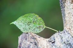 Åder av ett blad på en grön bakgrund royaltyfria foton