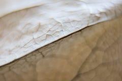 Åder på den torkade växtmakroen, mjuk fokus arkivfoton