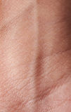 Åder på mänsklig hud royaltyfri bild