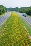 Åka lastbil körning på den gula blomman fodrade statliga huvudvägen i lantliga Virginia Royaltyfri Foto