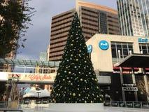 Åka skridskor cirkeln och julgranen, Phoenix, AZ Arkivfoto