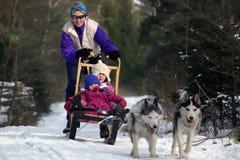 åka släde för hund Royaltyfri Fotografi