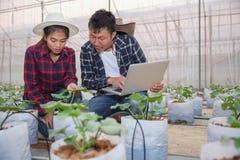 Åkerbruk agronom Using för teknologibegreppsman en bärbar dator i ett åkerbrukt fält som läs en rapport, en växtanalys och en for royaltyfria bilder