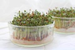 åkerbruk aromatisk bakgrundscressträdgård Royaltyfria Bilder