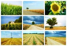 Åkerbruk collage arkivfoton