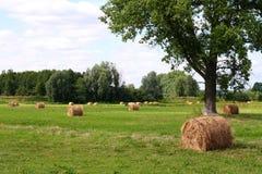 åkerbruk fält Arkivfoto