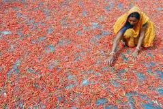 åkerbruk indier Arkivbild