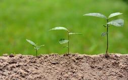 Åkerbruk miljö på växande momentbegrepp för natur arkivfoton
