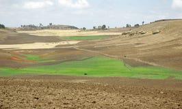 Åkerbruk område - Etiopien Royaltyfri Bild