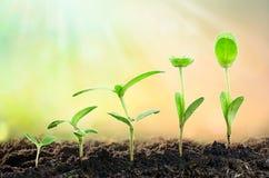 åkerbruk växt som kärnar ur växande momentbegrepp i trädgård och solljus, utrymme för text royaltyfria foton