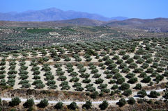 åkerbruka crete greece Royaltyfria Foton