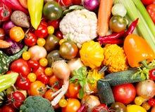 åkerbruka produktgrönsaker för ny marknad Arkivbild