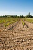 Åkerbruka vingårdar Arkivfoto