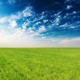 Åkerbrukt fält för grönt gräs och blå himmel Royaltyfria Bilder