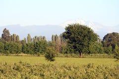 Åkerbrukt fält med berg Royaltyfri Bild