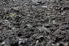 Åkerbrukt fält med svart jord för att plantera green låter vara naturmodelltextur Arkivbild