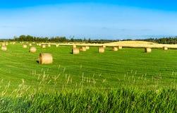 Åkerbrukt landskap, Alberta, Kanada Arkivfoton