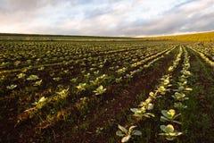 Åkerbrukt landskap för jordbruksmarker Arkivfoto
