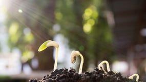 Åkerbrukt och kärna ur växten kärna ur det växande momentbegreppet Royaltyfri Bild