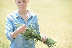 Åkerbrukt teknikeranseende för kvinna i grönt vetefält med ea Royaltyfri Bild