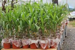 Åkerbrukt växthus Arkivfoton