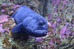 ål Arkivfoton