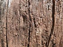 Ålder-förgrovad wood yttersida Royaltyfri Foto