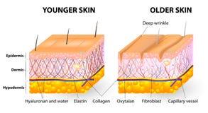 Åldras för hud stock illustrationer