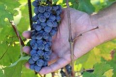 Åldras för vin Arkivbilder