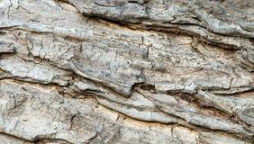 Åldrig bakgrund för textur för trädskäll Arkivfoto
