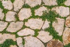 Åldrig stentegelstenvägg med det gröna murgrönabladet i Matera, Italien använda Royaltyfri Bild