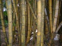 Åldriga bambu för framställning av hemslöjder arkivbilder
