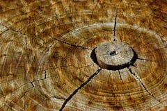 åldrigt trä Royaltyfri Foto
