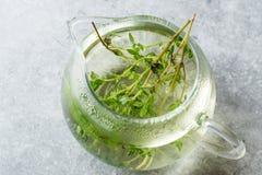 Ånga örtte i den Glass tekannan med sidor Fotografering för Bildbyråer