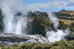 Ånga geyseren på Whakarewarewa, Nya Zeeland Royaltyfri Foto