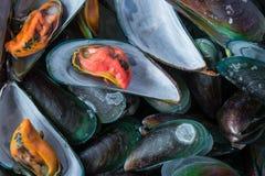 Ånga läcker skaldjur för musslor Fotografering för Bildbyråer