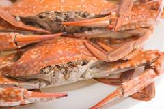 Ångad krabba för skaldjur arkivbilder