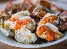 Ångad krabba med röda ägg Royaltyfria Foton