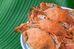Ångad krabba på plattan Royaltyfri Bild