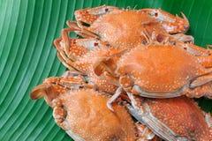 Ångad krabba, skaldjur Royaltyfri Fotografi