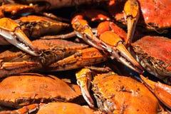 Ångade blåa krabbor från Chesapeakefjärden Royaltyfri Bild